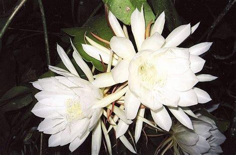 piante grasse da fiore piante grasse da giardino piante grasse piante grasse