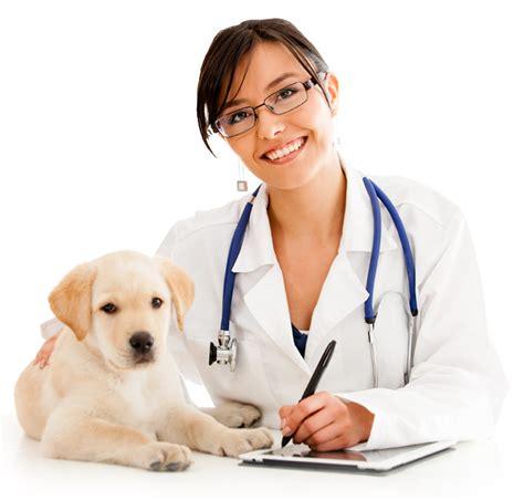 imagenes de medicas veterinarias el perro moderno instavets el veterinario en casa
