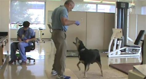 dog scenting in house first dog scent trained to detect thyroid cancer in human urine sles ilovedogsandpuppies