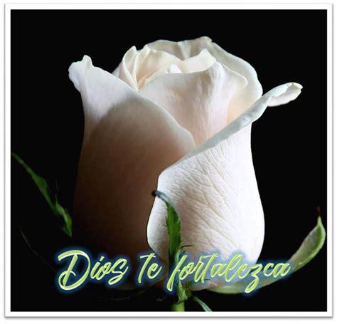 imagenes de luto rosas blancas rosas blancas para luto imagenes de luto