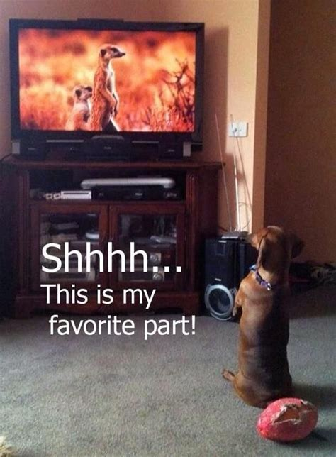 can dogs tv pics hilarious dogs to make you laugh pets world