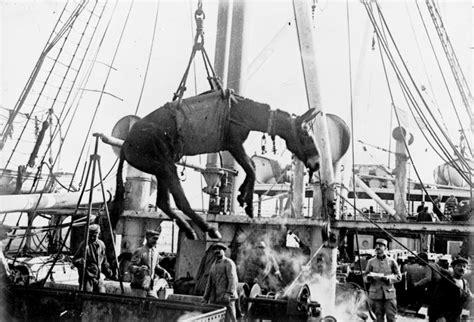 The Animals That Helped Fight World War I   Animals