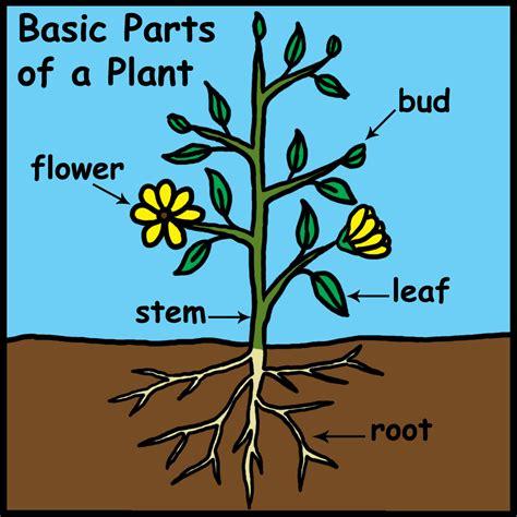 plant diagrams plant diagram clipart