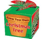 grow your own christmas tree made in america kits grow your own tree