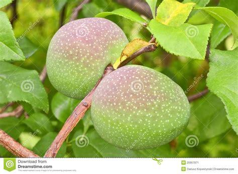 c fruit boston ma quincy fruits stock image image 25957971