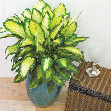 Monstera Pot Dan Daun Hijau 14 tanaman hias dalam ruangan indoor terbaik