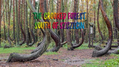 the crooked forest of gryfino poland must see crooked forest near gryfino poland bring