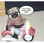 Pics Photos  Funny Pug Bunny Dog Meme Pugs Photo 34069917 Fanpop