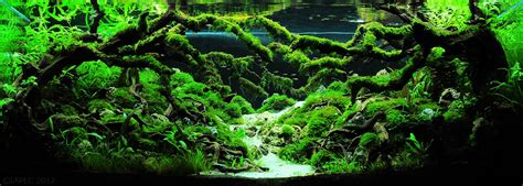 Aquascaping World by Iaplc 2012 Top7 Aquascaping World Forum