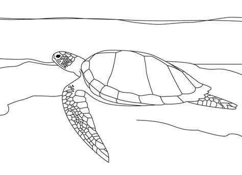 sea turtle coloring page printable free printable sea turtle coloring pages for kids