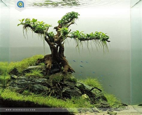 aquascape inspiration inspirational aquascape 1 apsa
