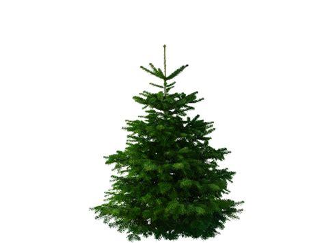 weihnachtsbaum tanne 28 images weihnachtsb 228 ume