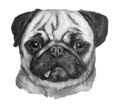 pug black and white black and white pug painting by cathleen klibanoff