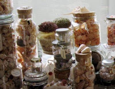 womans seashell collection coastal decor ideas