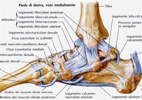 dolore piede laterale interno la distorsione alla caviglia una guida passo passo