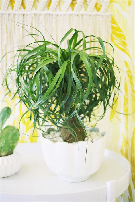 five easy to care for houseplants a beautiful mess
