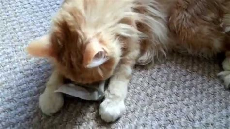 does catnip work on dogs epic high cats on catnip compilation