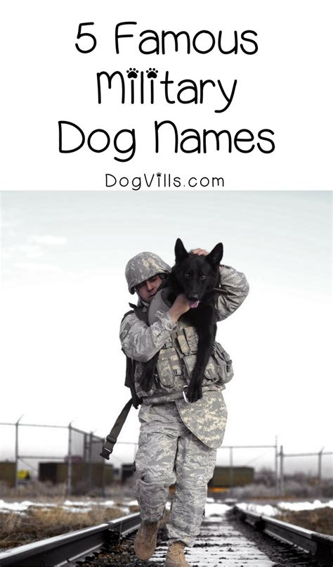 patriotic puppy names 5 names for patriotic pooches