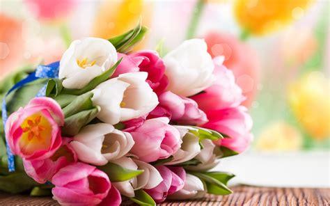 imagenes de rosas diferentes colores plantas e flores tudo o que precisa saber sobre plantas