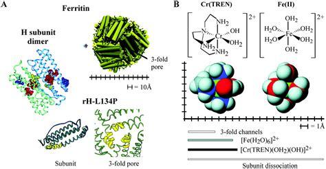 ferritina bassa alimentazione ricercatori di potsdam ottengono la prima proteina liquida