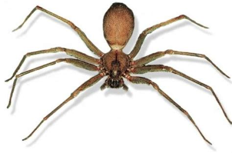 Can A Garden Spider Kill You Spiders That Can Kill You Some Scary Spiders Indeed