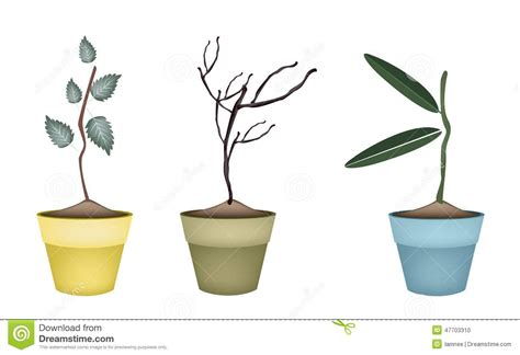 pots stock illustration image 45254770 fresh green and dry plants in flower pots stock vector