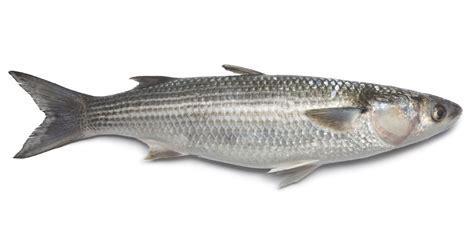 cucinare il cefalo cefalo mercato ittico chioggia chioggiapesca