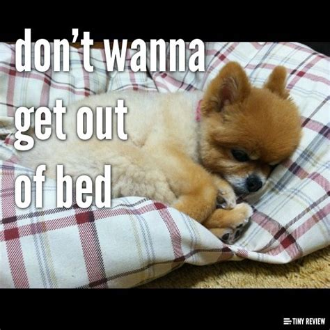 don t want to get out of bed don t wanna get out of bed cute pinterest