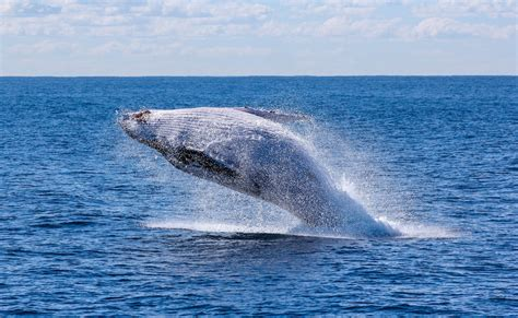 kauai small boat tours 100 snorkeling and whale watching with silver bank