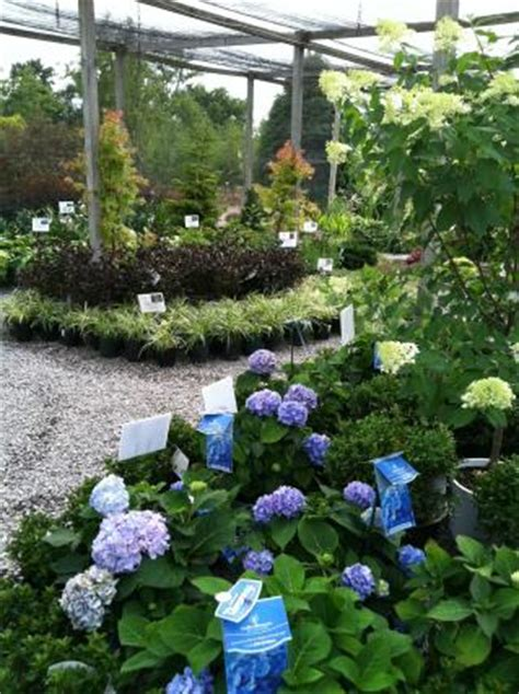 garden center glynn s landscaping nursery center