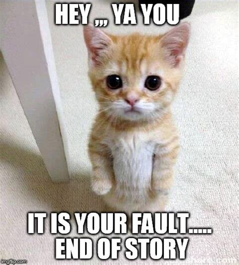 Your Memes End Here - cute cat meme imgflip