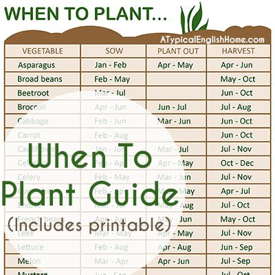 When To Plant Your Garden by A Typical Home When To Plant Vegetables Guide
