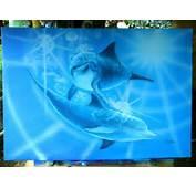 Imagenes De Con Delfines Car Tuning