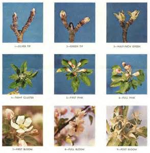 When Should I Plant Fruit Trees - ask ruth organic horticultural oil for fruit trees organic growers organic gardening