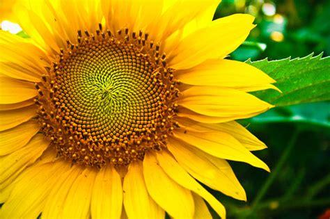 pesona  bunga nasional  bikin kamu  travelling