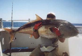 Tali Pancing Laut umpan alami untuk memancing di laut rois aquarium