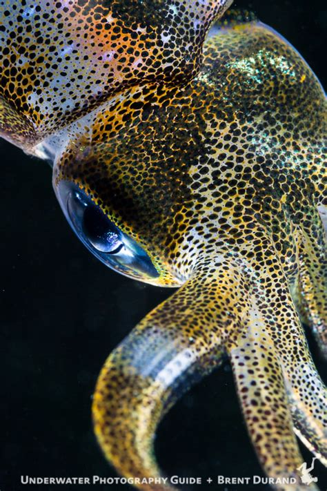 canon ef mm  macro  usm lens underwater