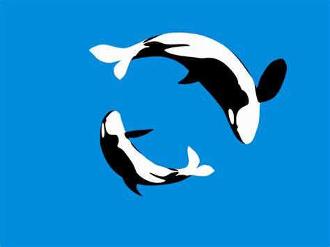wale gif orca gifs find share on giphy