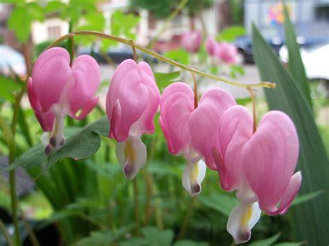 giardino ornamentale piante ornamentali piante da giardino piante
