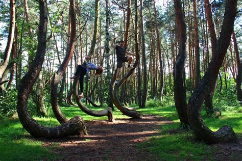 crooked forest wherever we want to be
