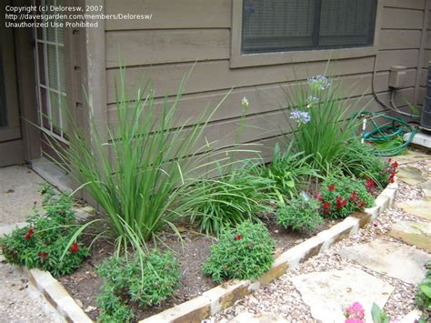 beginner gardening hello everyone i m new and i need some landscaping help 1 by deloresw