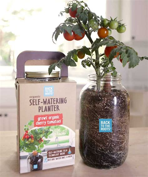 affordable self watering planter lets you grow a countertop garden self watering planters let you grow your own cherry