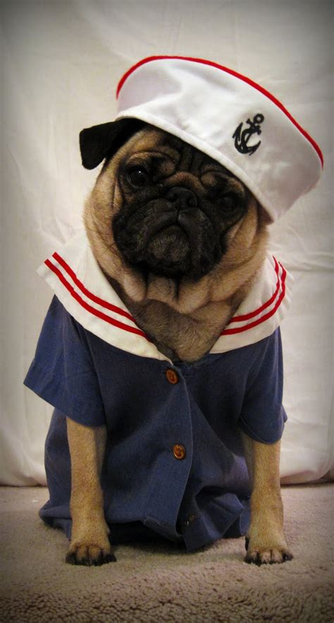 pug puppy clothes pugs clothes dress the clothes for your pets