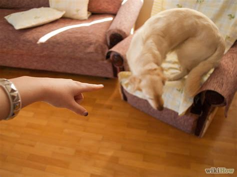 keep pets off couch 3 ways to keep pets off the furniture wikihow