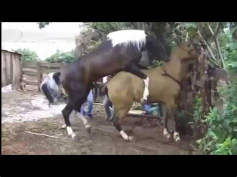 beim decken die welt tier paarung us pferde paarung