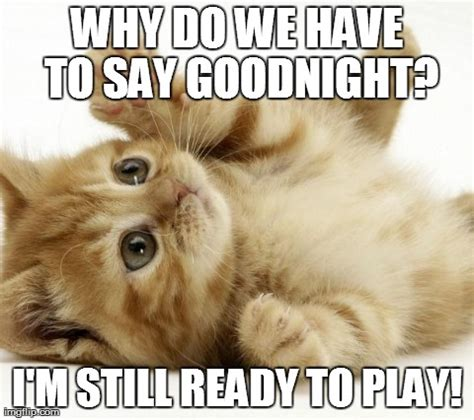 Goodnight Meme Funny - image tagged in cute cats animals imgflip