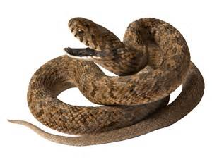 Download png image snake png image picture download free