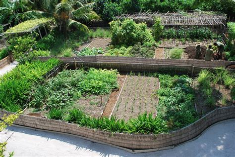 backyard permaculture garden design permaculture designs