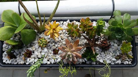 succulent planter box succulent and cactus arrangement balcony planter box