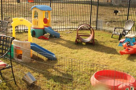 backyard dog toys legasea puppies